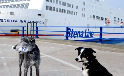 Pets travelling with Stena Line
