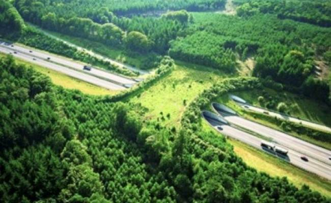 Wildlife bridge in Holland