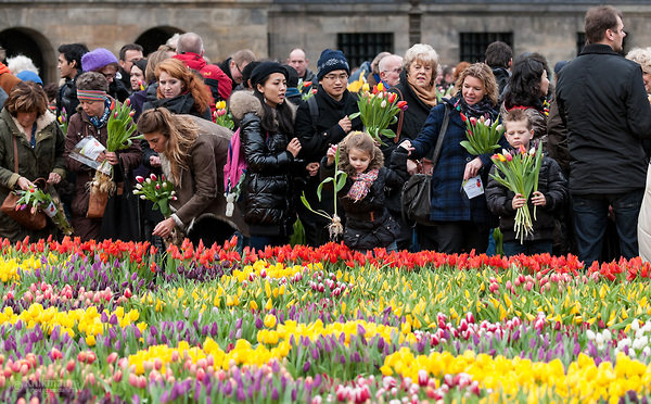 National Tulip Day, Amsterdam