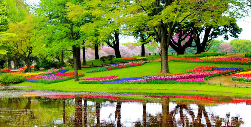 visit the Keukenhof Gardens in Holland this March/April and May 2017