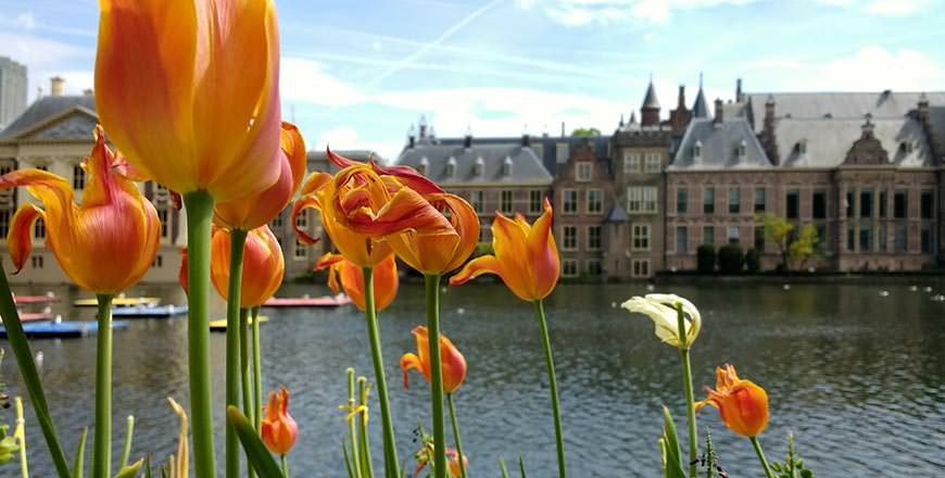 Visit Holland in Bloom